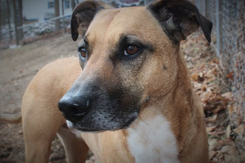 Základová fotografie zdarma na téma domácí mazlíček, pes, záchranný pes, zvíře
