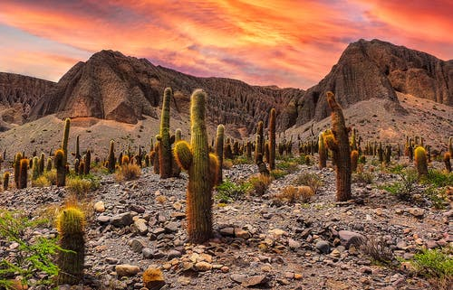 Green Cactus on Rocky Ground during Sunset