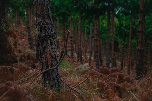 Free stock photo of arbol, bosque, forest