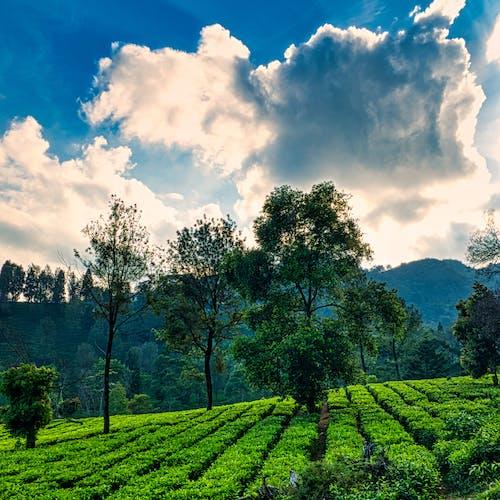 Immagine gratuita di agricoltura, agronomia, albero