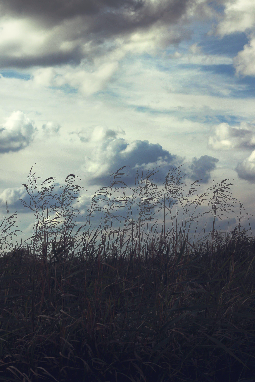 Foto stok gratis awan, bagus, belukar, bidang