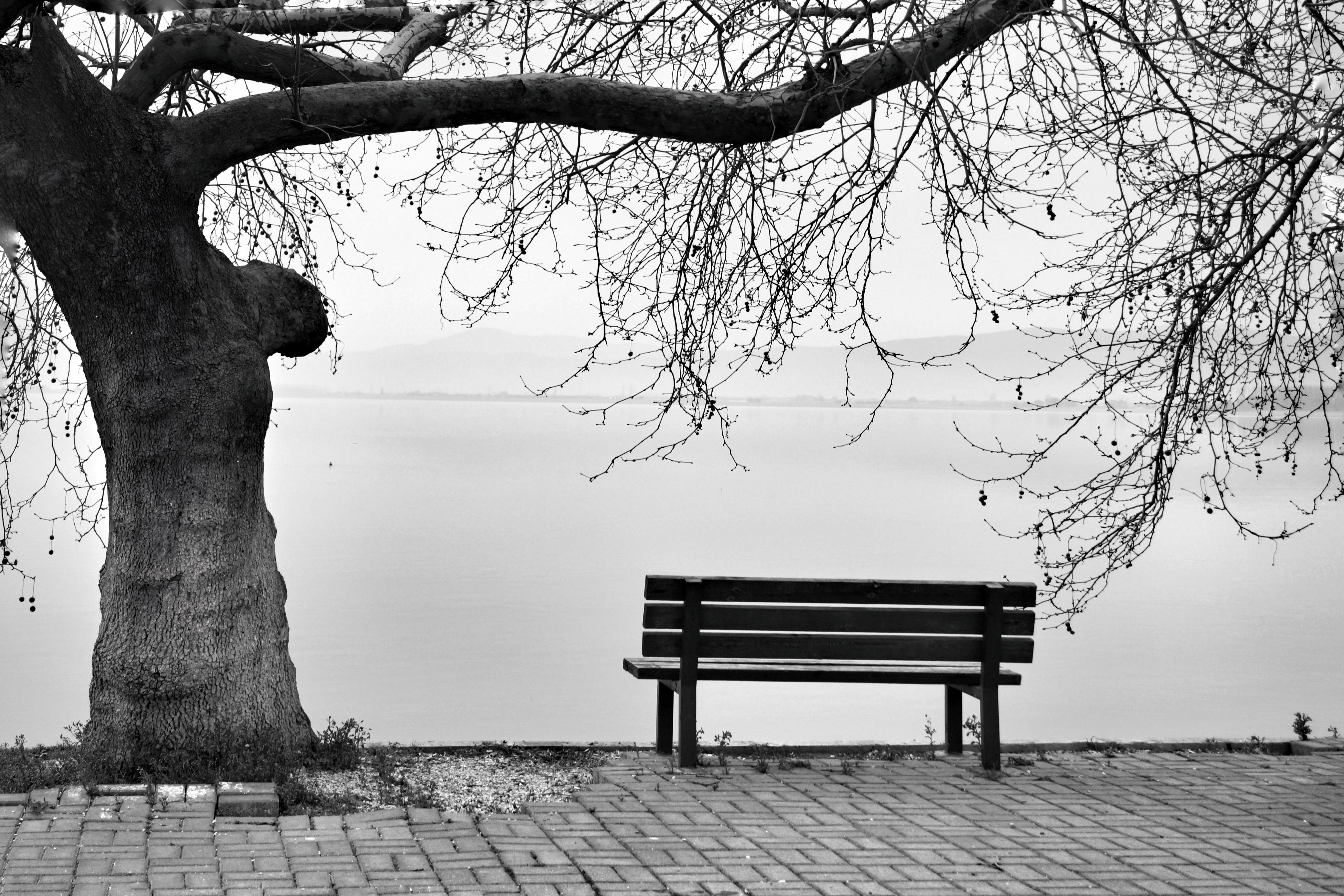 Free stock photo of bench, lakes, trees