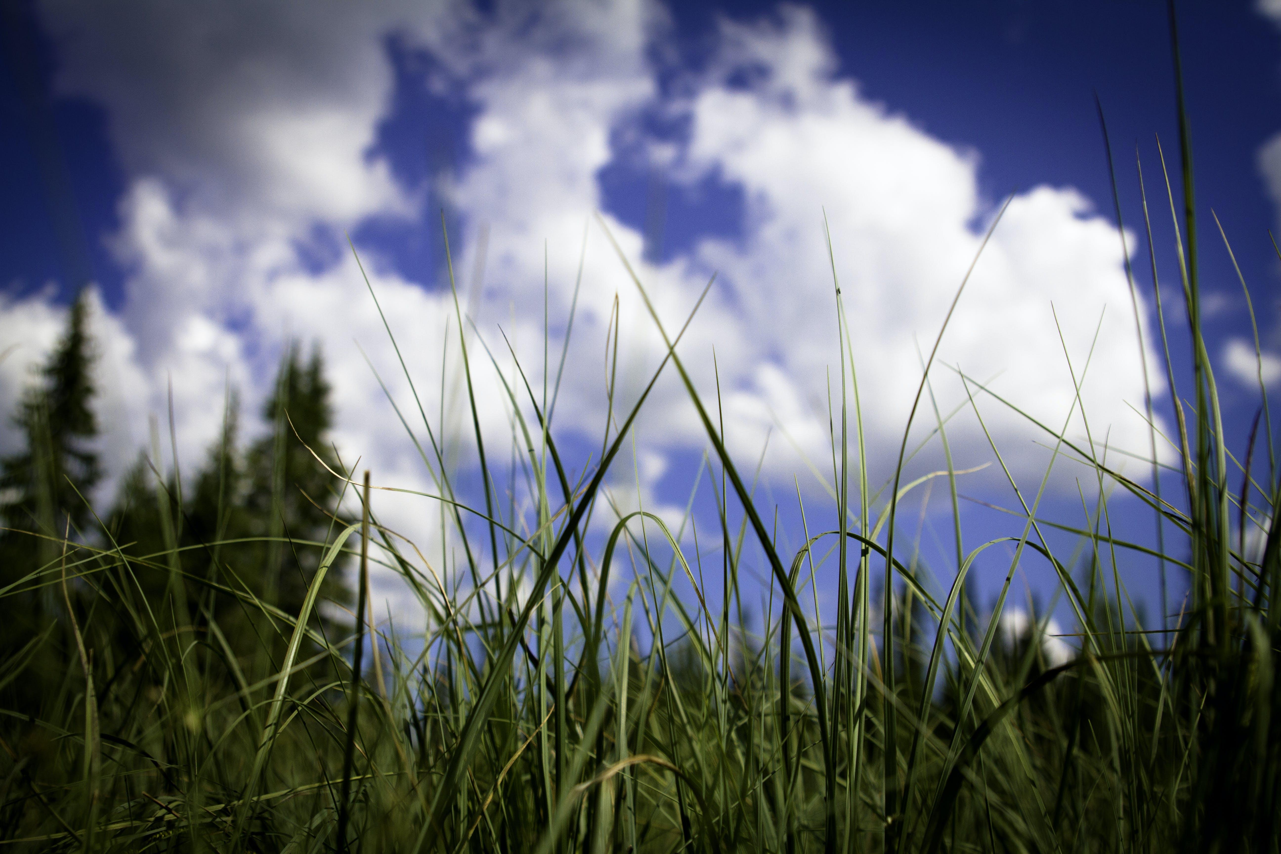 clouds, grass, nature