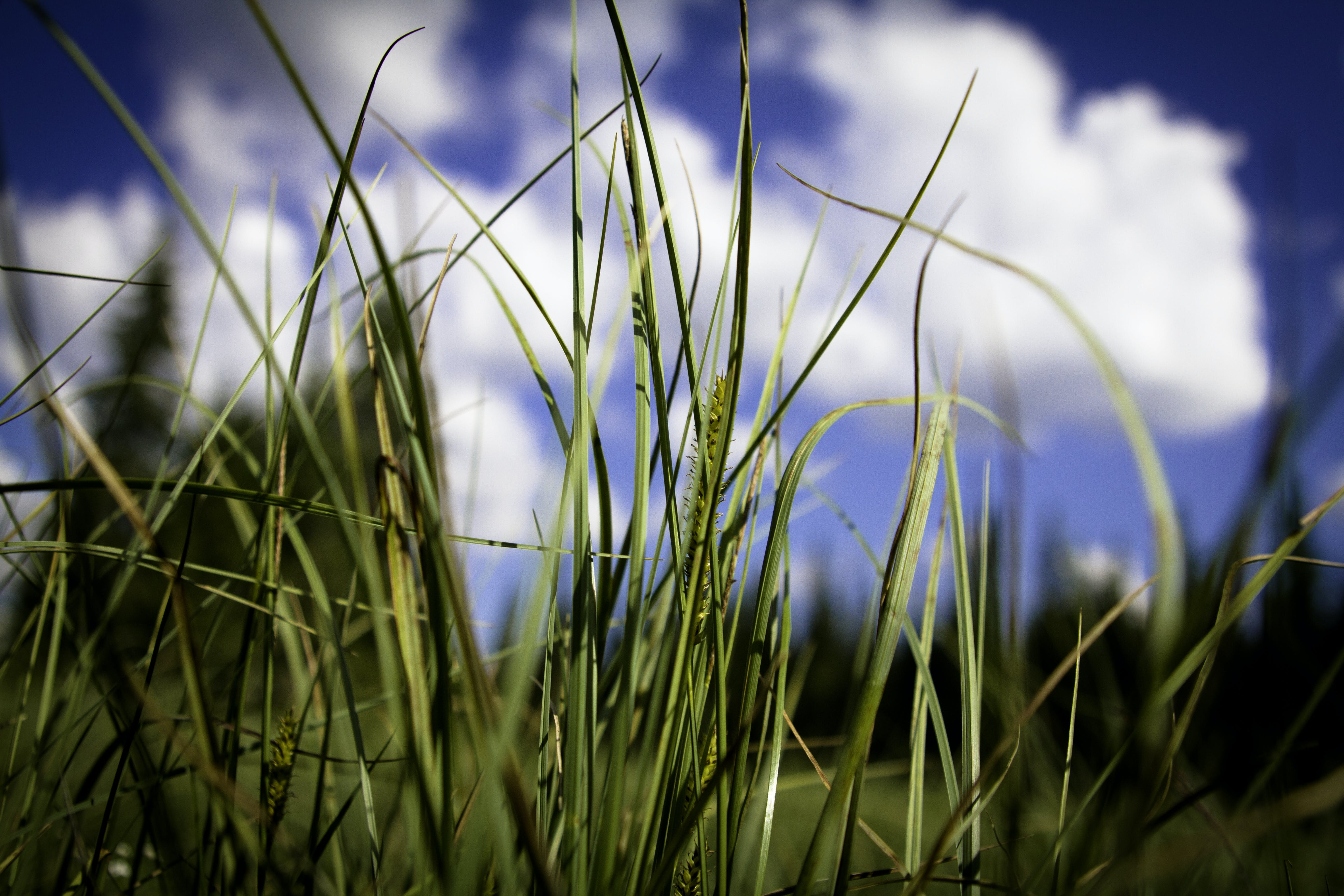 Free stock photo of clouds, grass, nature, straw