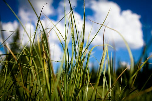 Free stock photo of clouds, grass, nature