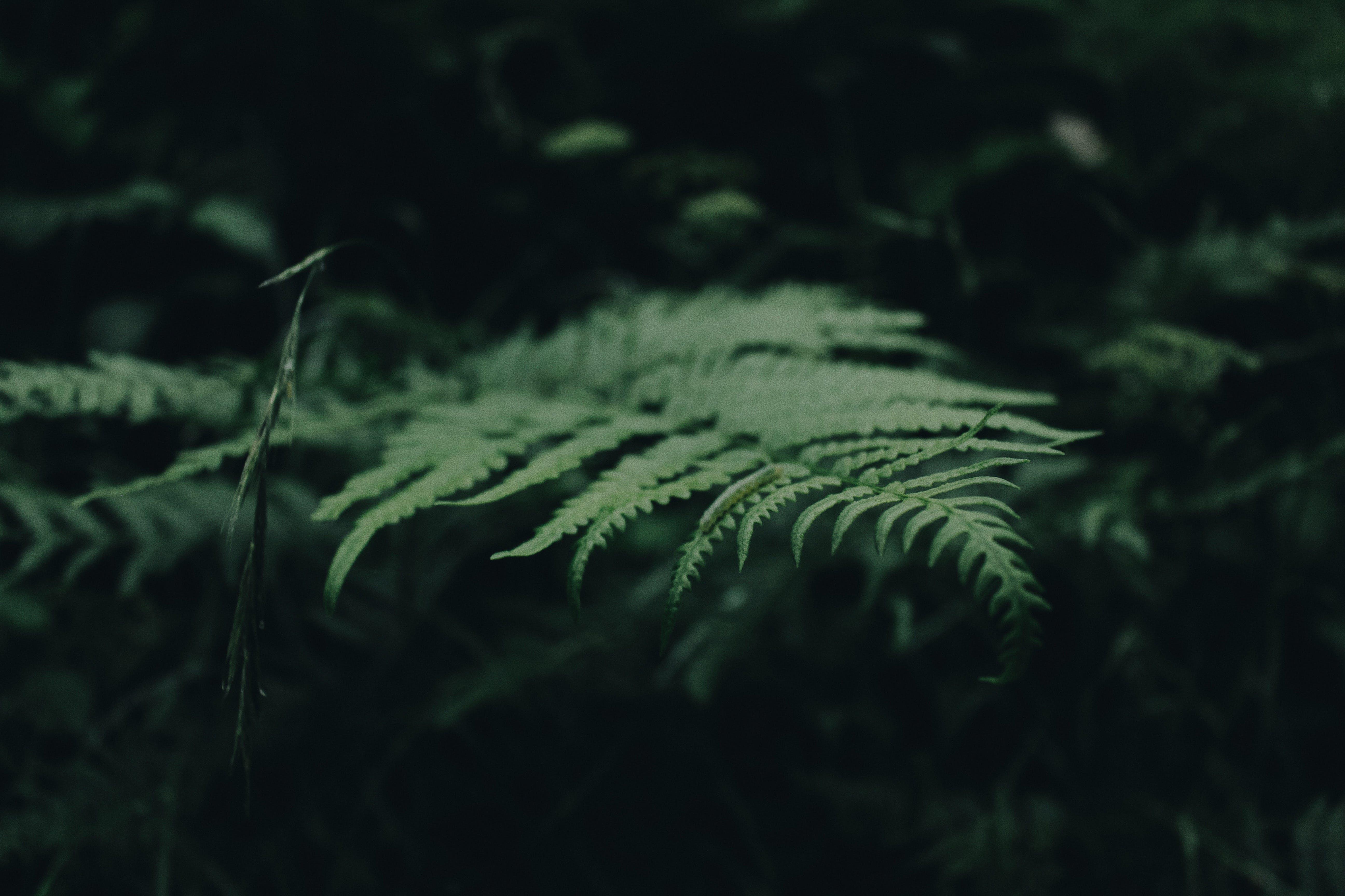 blatt, farn, grün