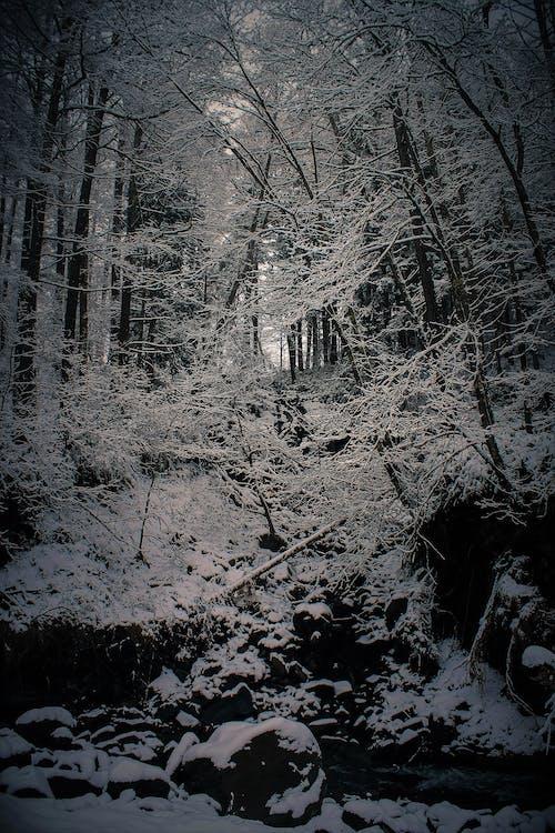 Free stock photo of big river, cool wallpaper, heavy snowfall