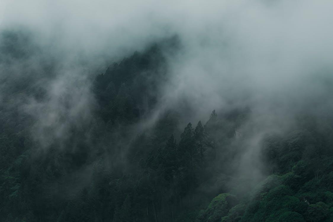 Fotos de stock gratuitas de brumoso, con neblina, con niebla