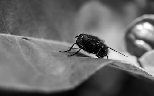 Kostnadsfri bild av blad, fluga, flyga