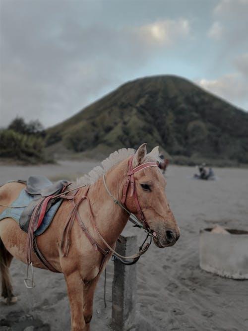 Chestnut horse in saddle standing on hillside