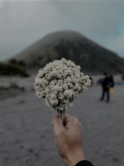 Crop man holding bouquet of baby breath flowers in highlands