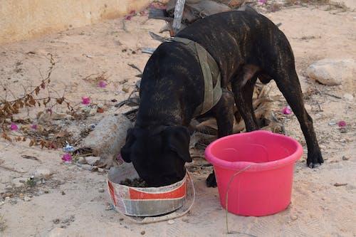 Photos gratuites de chiens, égypte, la psychographie