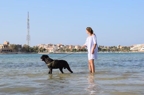Photos gratuites de amitié, chien, égypte