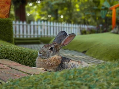 Adorable rabbit resting on grassy meadow on backyard