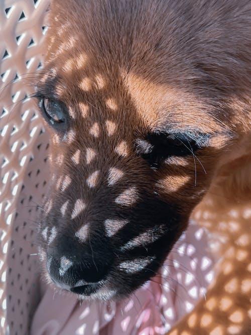 Adorable dog in basket in sunlight