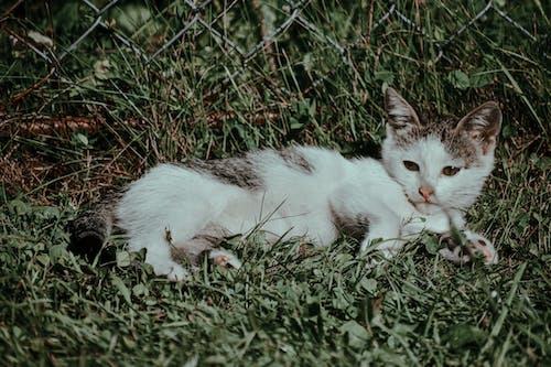 Calm kitten resting on grass