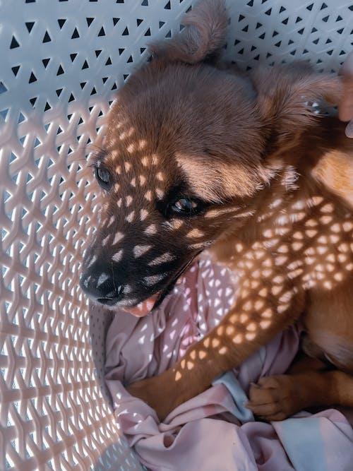 Cute dog lying in basket