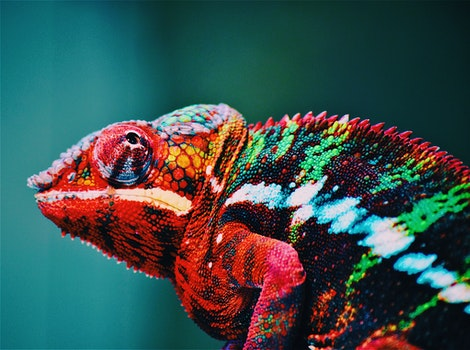 Free stock photo of animal, blur, zoo, colourful