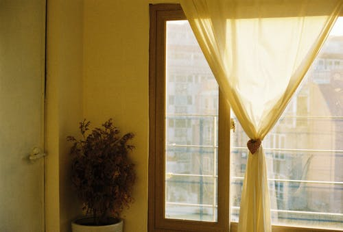 Indoor Plant beside Glass Door