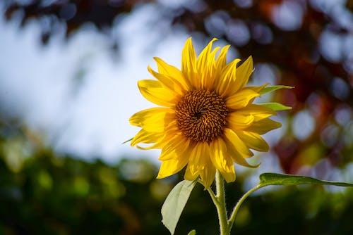 Fotobanka sbezplatnými fotkami na tému exteriéry, flóra, jemný, kvet