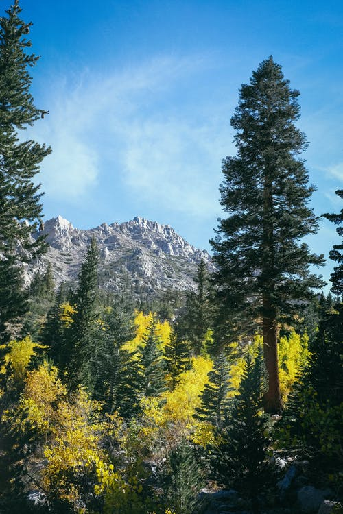 Green Pine Trees Near Mountain Range
