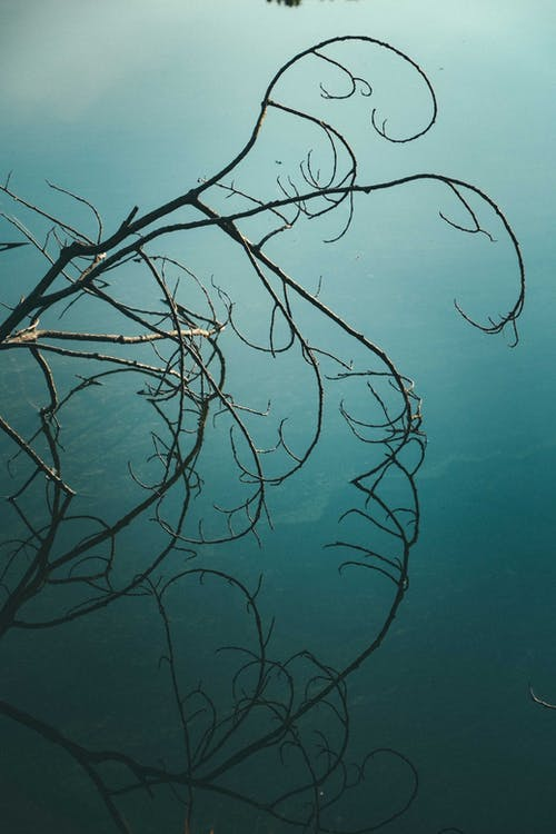 From above of leafless tree with thin curved twigs growing against green ocean in fog