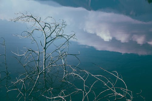 Dry bare tree branches against calm lake water surface reflecting blue cloudy sky
