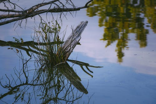 Dry branches and green grass reflecting in tranquil water of pond under blue cloudy sky in autumn day