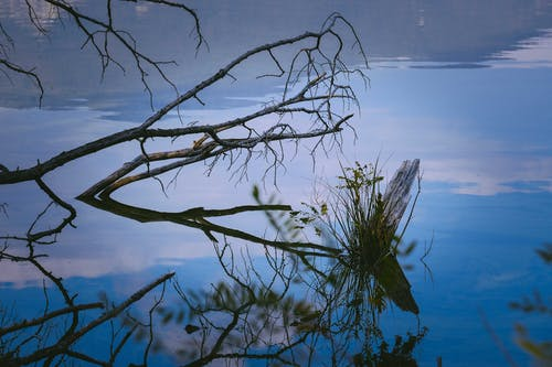 Calm lake reflecting tree branches and sky