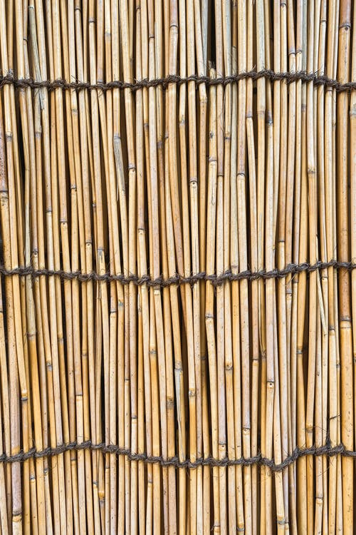 Wooden bamboo background with arranged long thin stalks of wood tied with ropes on fence of rustic construction with uneven surface