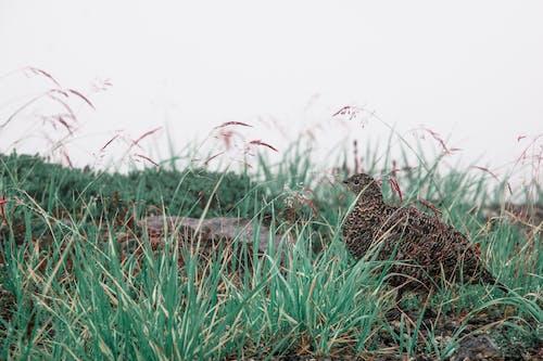 คลังภาพถ่ายฟรี ของ ธรรมชาติ, สัตว์, โคลสอัป