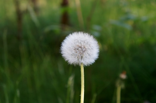 Free stock photo of nature, grass, plant, blur