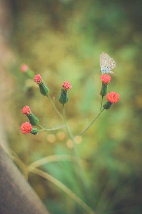 Imagine de stoc gratuită din blur, curtea din spate, flori, fluture