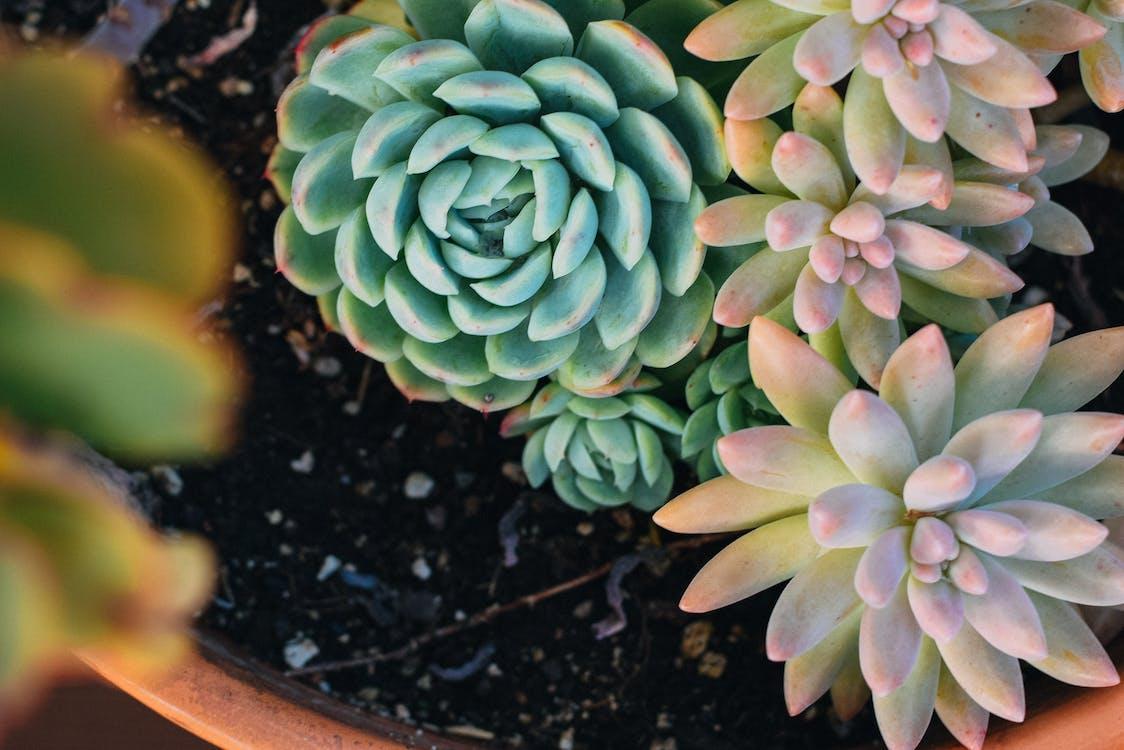 Succulent plants growing in flowerpot