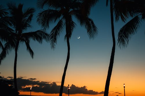 Palm Tree during Golden Hour