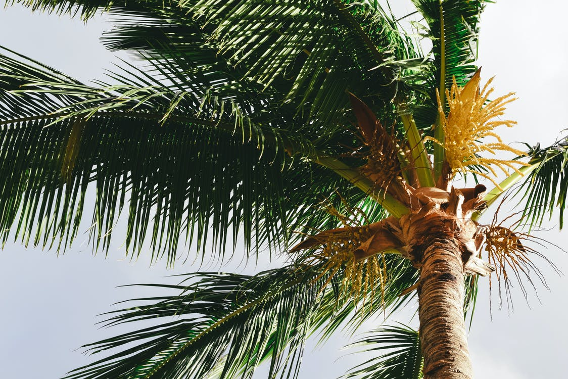 Exotic palm tree in summer day