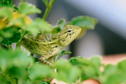 Side view of small lizard with thick skin and tiny round eyes looking ahead on branch with vibrant green leaves on blurred background