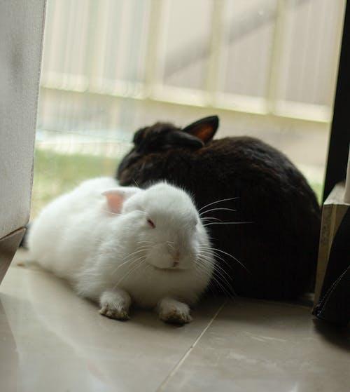 Gratis arkivbilde med svart hvite babykaniner som sover pelsete søte bunni