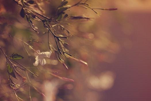 Kostenloses Stock Foto zu natur, sommer, pflanzen, blumenstrauß