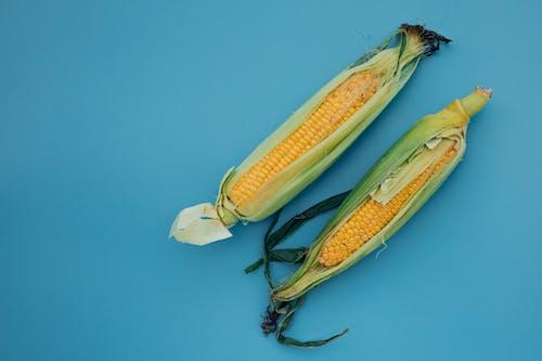 Yellow Corn on Blue Surface
