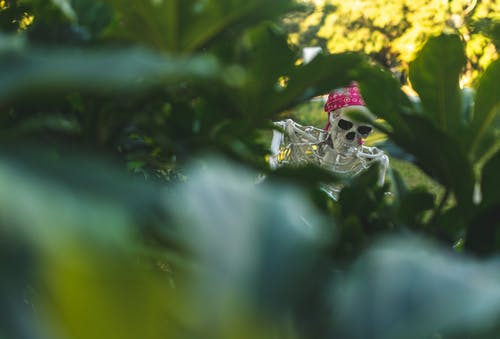 Free stock photo of halloween, skeleton