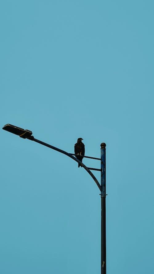 Gratis arkivbilde med bluehour, due, dyr, dyreliv