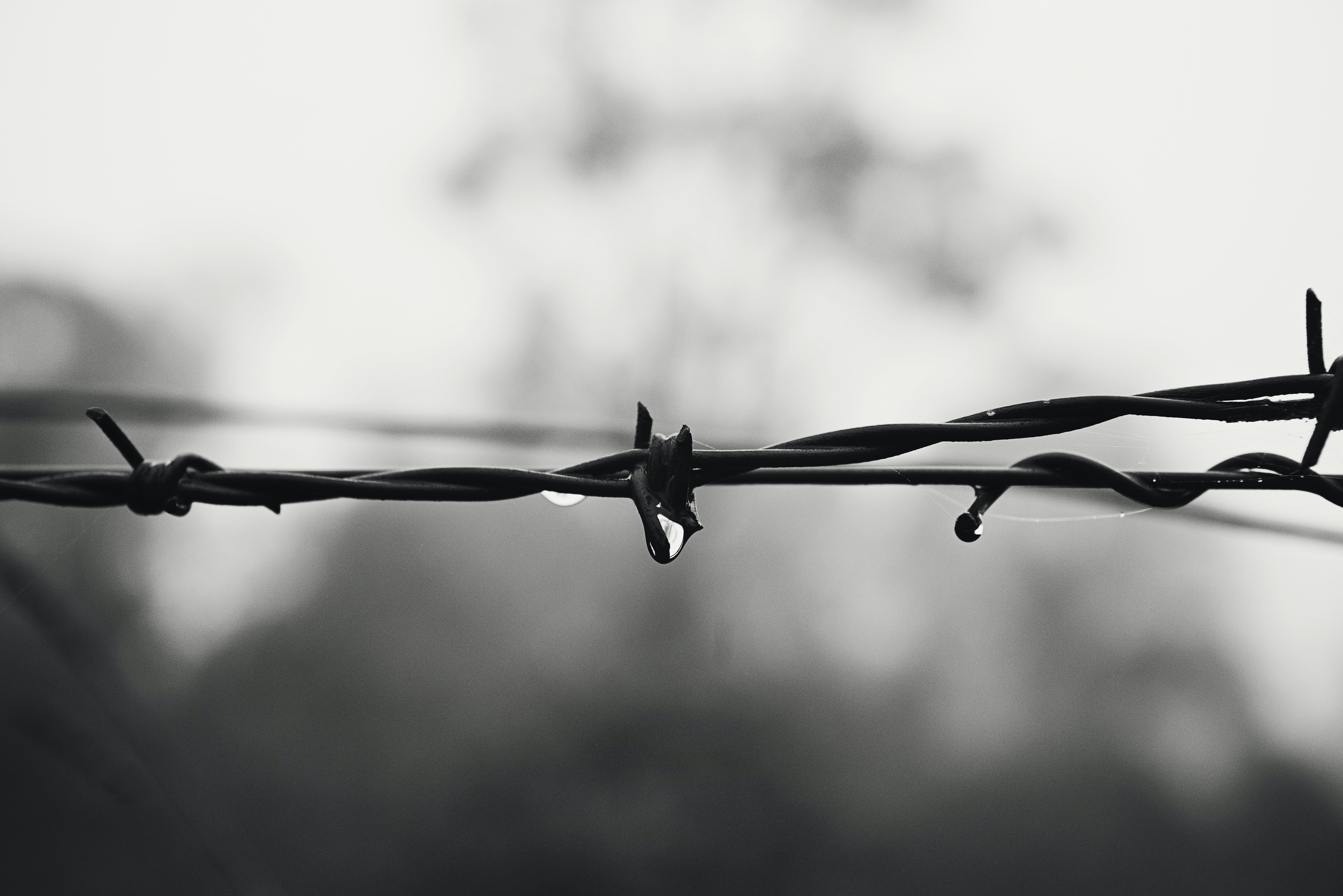 barbed wire, black-and-white, blur