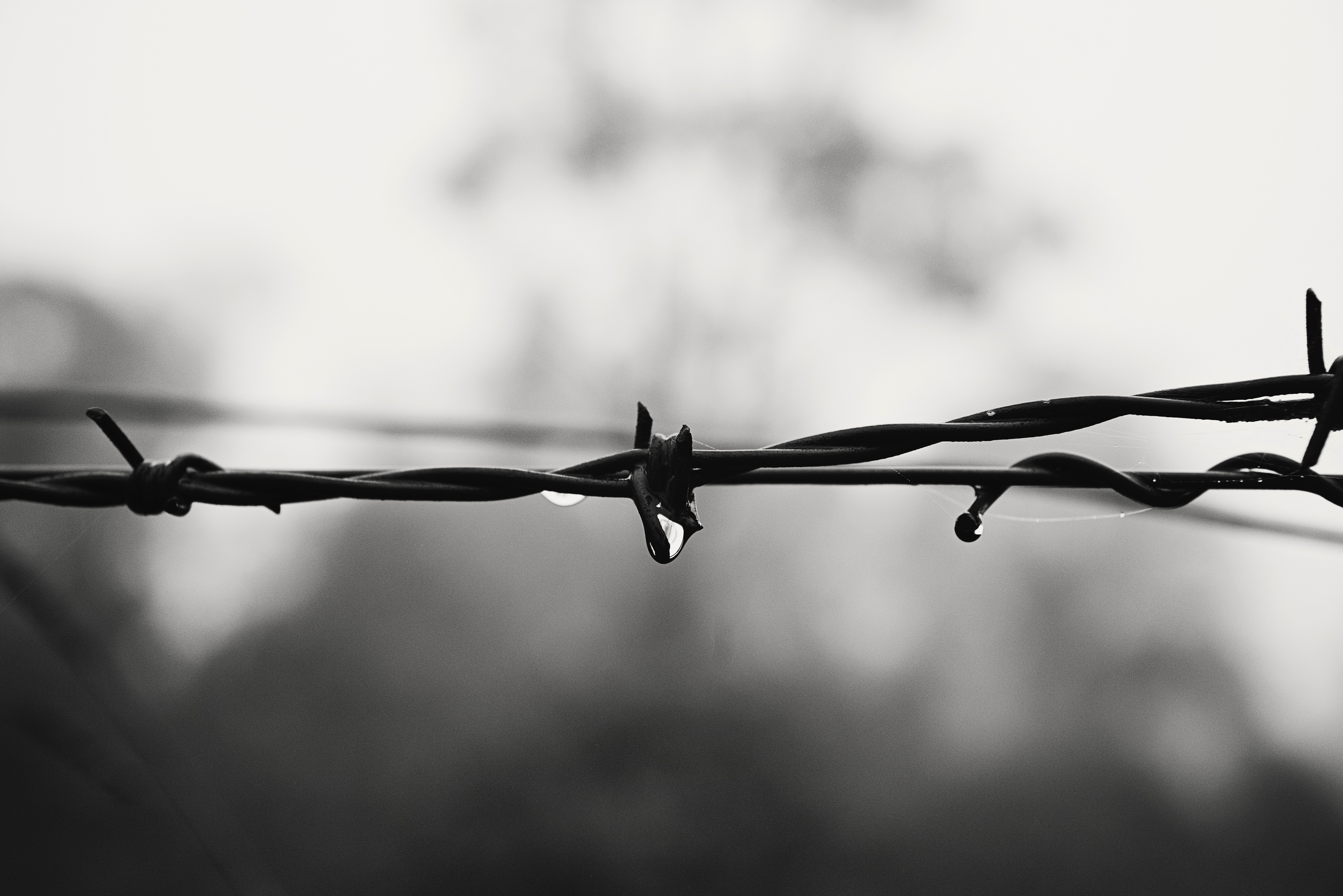 250+ Interesting Barbed Wire Photos · Pexels · Free Stock Photos