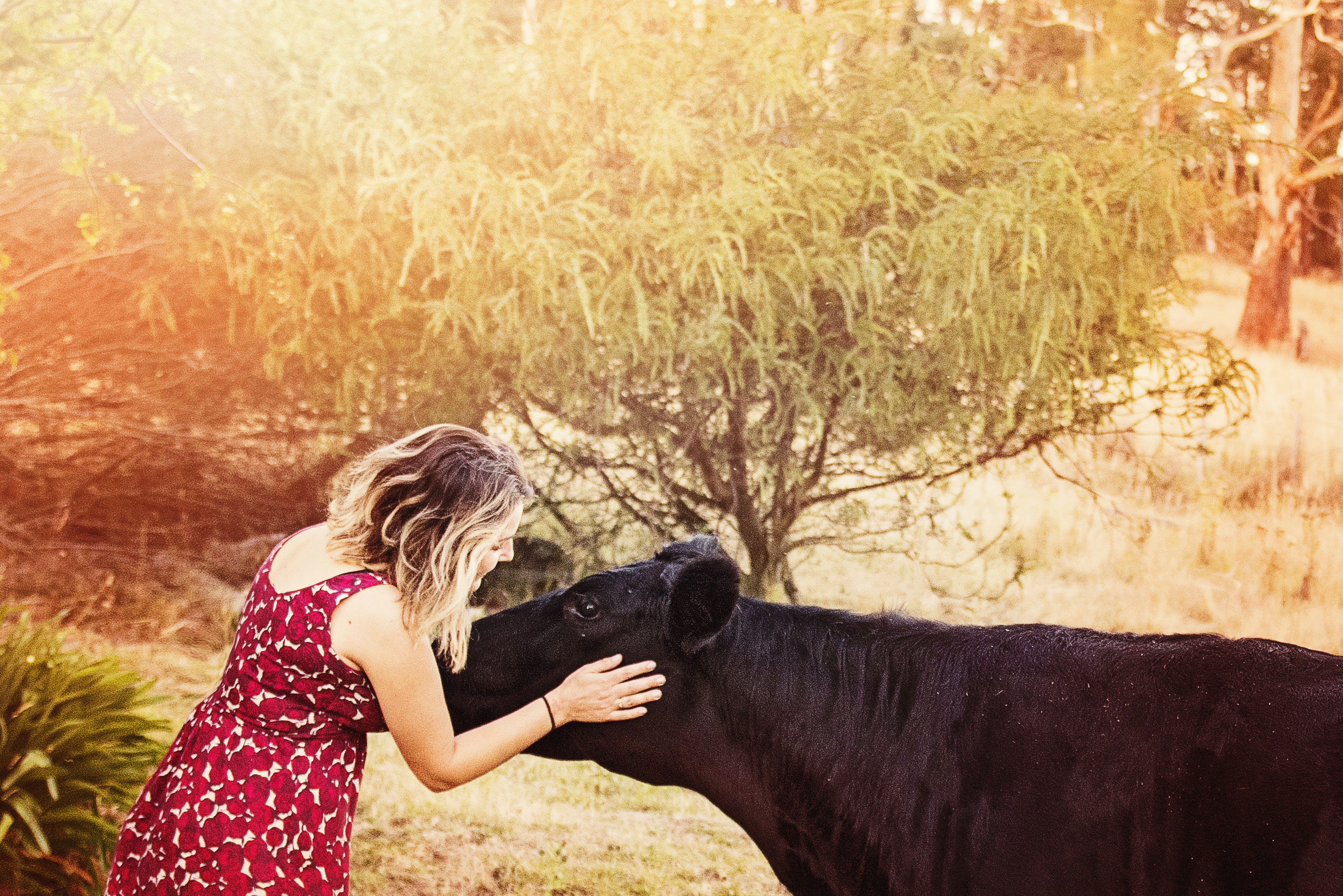 Woman Wearing Floral Dress Holding Cattle Near Trees