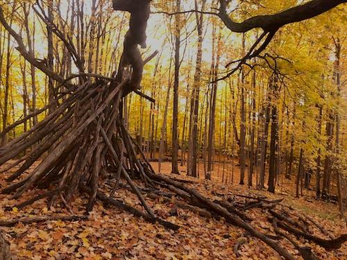 Free stock photo of autumn, autumn mood forest, fall trees
