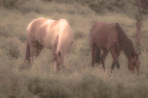 Δωρεάν στοκ φωτογραφιών με αγρόκτημα, ζώο