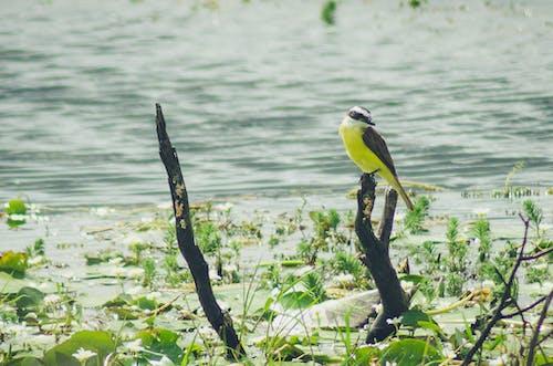 Δωρεάν στοκ φωτογραφιών με άγρια ζωή, φωτογραφία άγριας φύσης