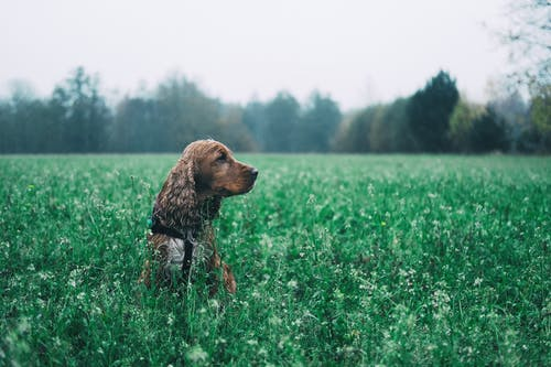 Brown Short Coated Dog on Green Grass Field