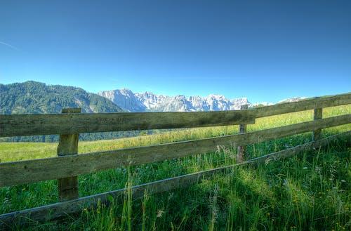 Foto d'estoc gratuïta de arbres, camp, camp d'herba, cel